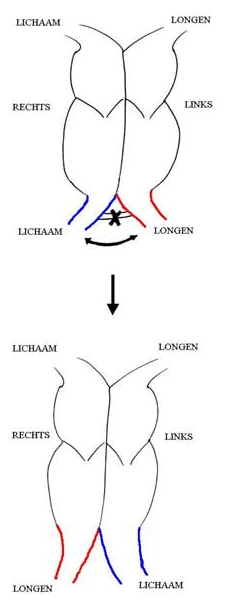 figuur 4.png